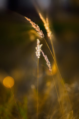 Трава в лучах осеннего солнца