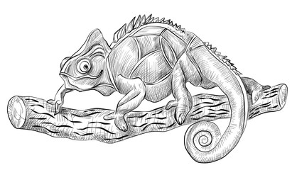 chameleon lizard sitting on tree, side view, black and white hand drawn vector sketch