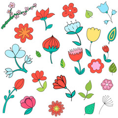 Different color flowers vector illustration