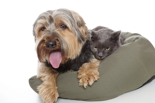 chat et chien dans panier