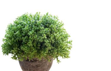 The green garden leaf