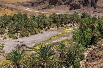 oasis de Finnt - Ouarzazate