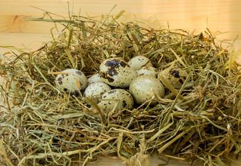 Quail eggs in hay