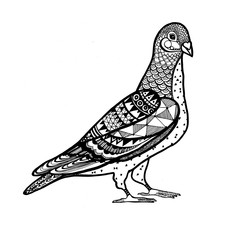 Ornamental Pigeon, trendy ethnic zentangle design, hand drawn, isolated vector illustration