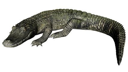 Quiet caiman - 3D render