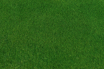 Tuinposter Gras real green grass background