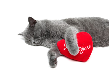 sleeping cat and red pillow on a white background