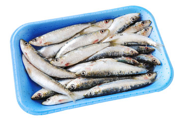 Fresh raw sardines in polystyrene box isolated on white