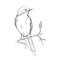 Bird pencil grey sketch vector illustration