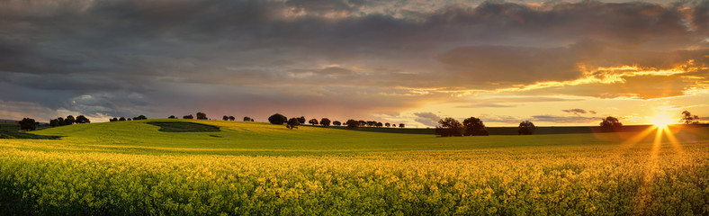 Spoed Fotobehang Honing Canola farmlands as the sun sets