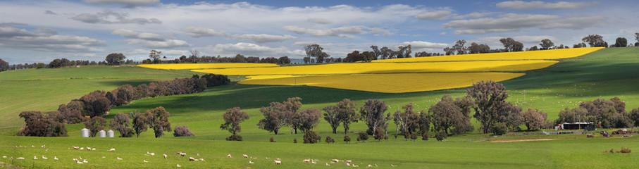 Green pastures and fields of Gold Wall mural