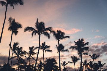 Pink sunset with silhouettes of palm trees