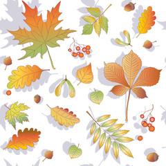 fall, tree leaves, pattern, acorns