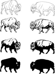 bison, buffalo, aviary, safari bison herbivore, prairie, reservation, horn, portrait, various postures of the animal, buffalo head