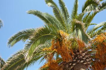 pulm tree