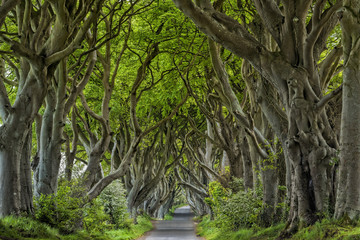 Irland Dark Hedges