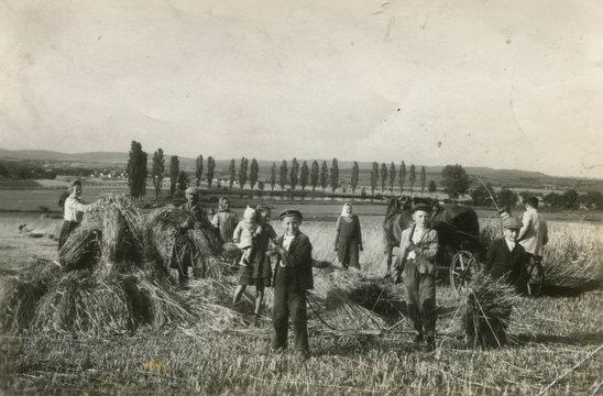 farmer harvest old photo