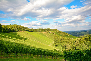 Southern Styria Austria - Panoramic view over the vineyards before the harvest