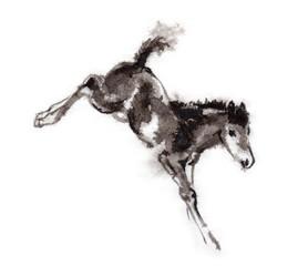 Bucking foal oriental ink painting. Sumi-e art