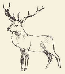 Deer Engraving, Vintage Illustration, Vector