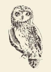 Owl vintage illustration retro hand drawn sketch