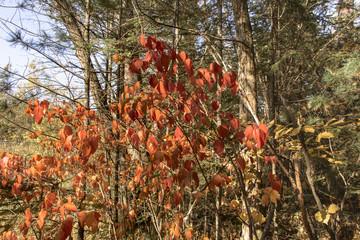 The colors of autumn.  Bright autumn colors in the Far Eastern taiga.