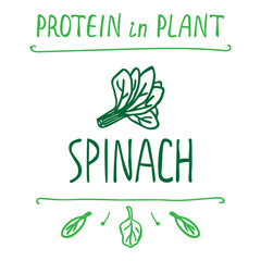Hand Drawn Spinach Leaves