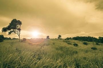 sunny wild meadow