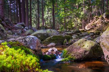 Krajobraz magiczna rzeka w lesie jesienią na słońcu.