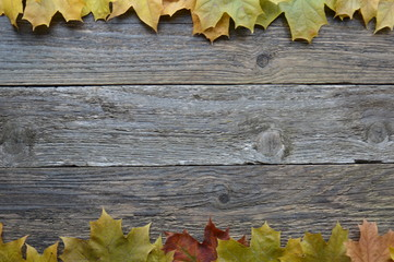 background autumn leaves on the boards