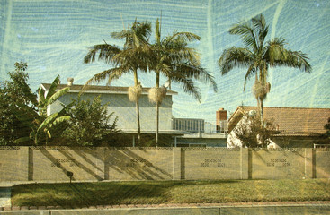 aged and worn vintage photo of neighborhood with palm trees