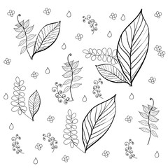 Seamless pattern of flowers and leaves on a white background