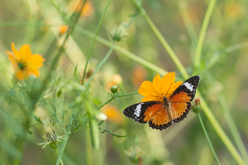 Butterfly and beautiful flower