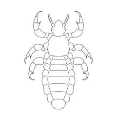 A head  human louse. Pediculus humanus capitis. Sketch of louse