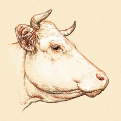 engrave cow illustration