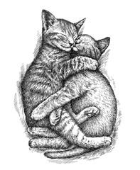 engrave kitten illustration