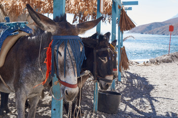 The donkey taxi for a stopover on the island of Kos in Greece.