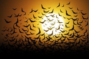 Bat on full moon halloween background