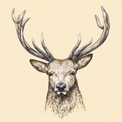 engrave deer illustration