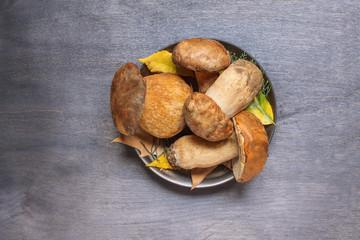 Fresh five mushrooms boletus in the plate