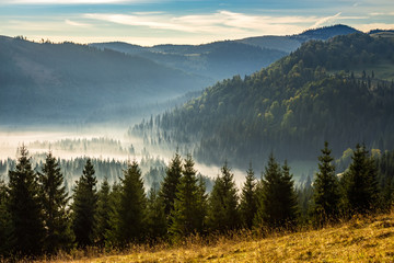 Wall Murals Forest coniferous forest in foggy Romanian mountains at sunrise