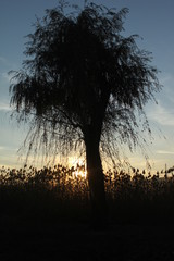 Sunset_And_Tree