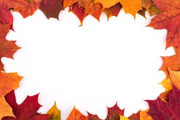 Bright autumn leaves of a maple on a white background