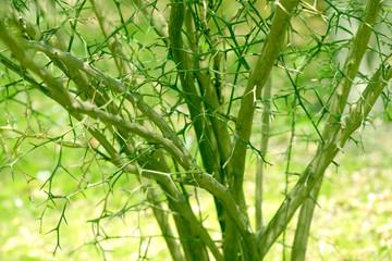야생화와 자연곤충