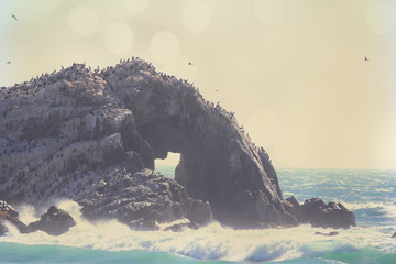 The ocean coast with crashing waves on a rock with birds.