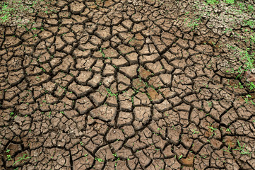 Dry cracked earth, Cracked soil ground background.