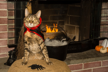 A cute cat dressed as a Vampire on Halloween.