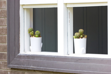 Two cactus on a windowsill.
