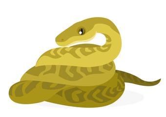 serpiente boa pitón