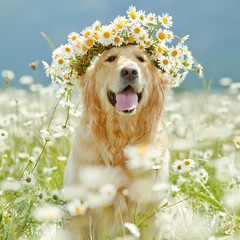 Beautiful dog with bunch